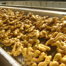 High Quality Fresh Ginger Supplier 150-200g