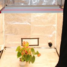 LED-Pflanze wächst leicht mit mehreren Balken