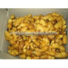 50-200g de jengibre fresco chino