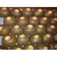 Neue Ernte Gute Qualität Frische Kiwi