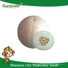 Suntoday Cueillette facile Croûte blanche à chair souple blanche Asiatique hybride végétale F1 Graines de melon bio japonais (18012)
