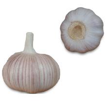 Usine de fabricant d'ail frais de Chine