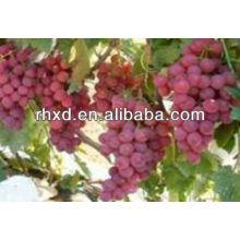 2013 китайский свежий красный виноград/красный виноград глобальной/лучший свежий красный виноград для продажи