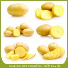 World price of potato