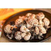 Champignons déshydratés de légumes séchés