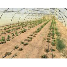UV Stabilisted Agriculture Greenhouse Tying