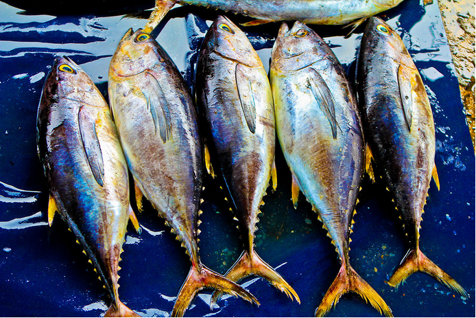 Popular Frozen Yellow Fin Tuna