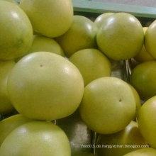 Exportierte Standardqualität von frischem Honig Pomelp