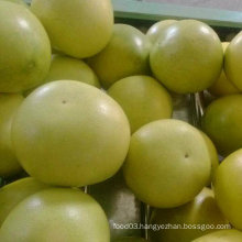Exported Standard Quality of Fresh Honey Pomelp