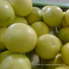 Qualidade padrão exportada de mel fresco