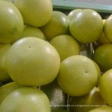 Calidad estándar exportada de pomelo fresco de miel
