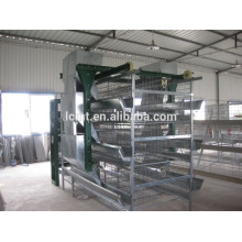 Automatic quail feeding equipment