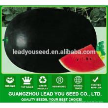 MW18 Tuohei semillas de sandía híbridas negras de piel fina para las ventas