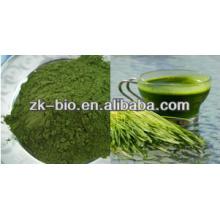 Polvo de jugo orgánico natural de Wheatgrass del 100%