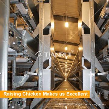 Jaula de ave de corral automática de la fuente de la fábrica de China para el pollo de broiler