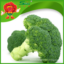 Wholesale frozen broccoli spears