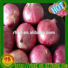 Onion Type and Common Cultivation Type bulk fresh vegetables