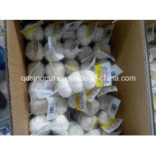 Pure White Garlic 3p 10kg Carton