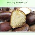 Supply 100% Mature Fresh Chestnut Fromchina