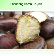 Supply 100% Mature Fresh Chestnut Fromchina