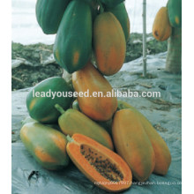 MPA01 Honghui hot sale hybrid papaya seeds company