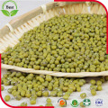 Common Cultivation Green Mung Beans for Sprouting