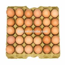 cartón alto del huevo, proveedores hightop del cartón del huevo