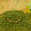 Prime Qualität Grüne Mungobohnen zum Keimen, Maschine gereinigt