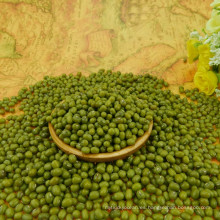 Hot sale!Small green mung bean,2.8-4.0mm types,best qualtiy