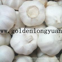 2016 New Crop Fresh White Garlic with Carton Packing