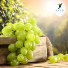 Extrato da pele da uva do alvejante da pele dos ingredientes dos cosméticos Extrato da polpa 5% do Resveratrol 30% do PE dos cosméticos