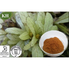 Extrait d'Engelhardtia Roxburghiana Astilbin 80%