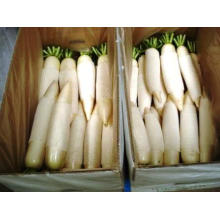 Good Delicious Fresh White Radish (150-200G)