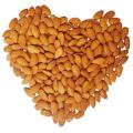Novo preço competitivo das culturas de sementes de damasco amargo na China