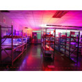 Best LED Grow Lights for Agriculture Greenhouse