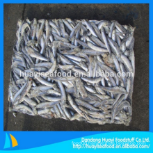 fresh frozen anchovy fish with favourable price