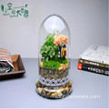Home Decor Terrario de cristal con base