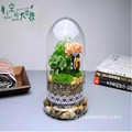 Home Decor Glass Terrarium With Base