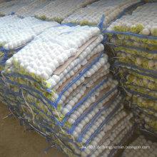 New Crop Chinese Knoblauch Reines Weiß in Kleiner Tasche