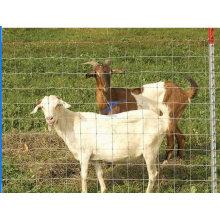 Cerca de ganado galvanizado de ovejas / ganado