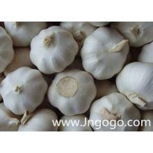 Nouvelle récolte de l'ail blanc frais de haute qualité