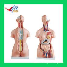 HR-204 85CM Unisex Torso Model 85cm (20 частей), мужские женские органы