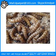 Vers de farine séchée en gros pour aliments pour animaux domestiques