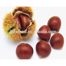 Chinese Sweet Taste Fresh Chestnut in Shell