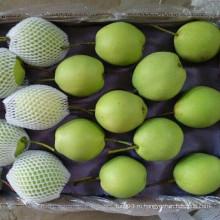 2016 Свежая новая культура Шаньдунская груша