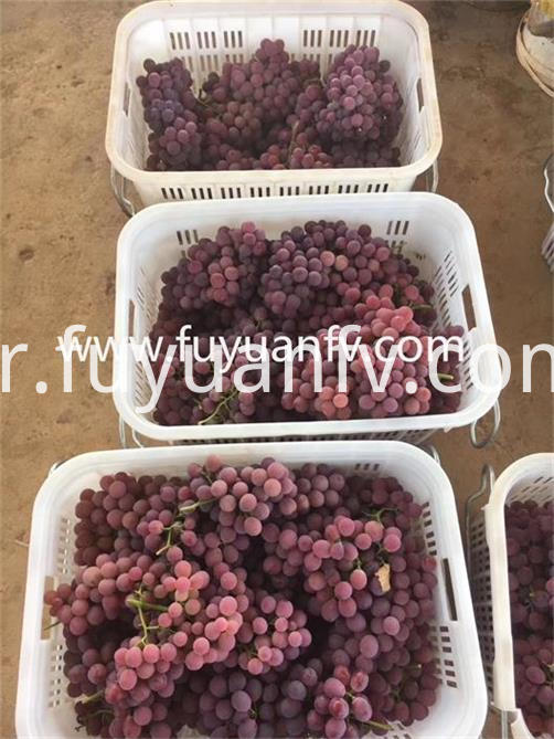 fresh red grape