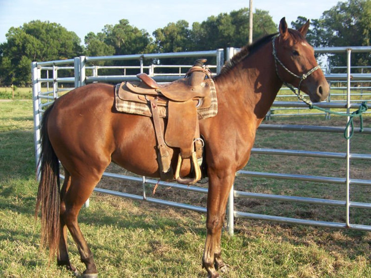 Livestock Horse Fence Panels (7)