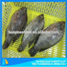 frozen tilapia whole
