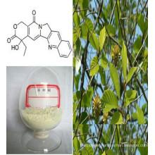 Camptothecine & Camptotheca Acuminata Decne Extract