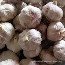 garlic keeper import chinese red purple garlic price in china